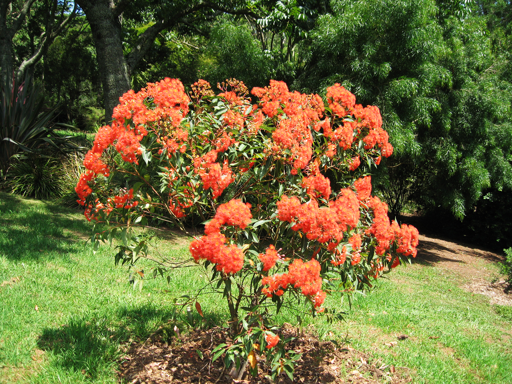 Is orange the new colour